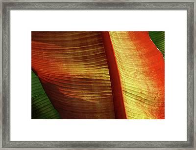 Fire Palm Framed Print