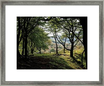 Woodland - Fire Pit And Trees Framed Print