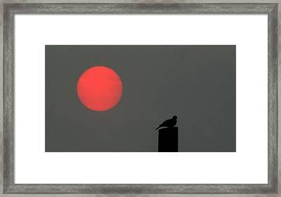 Fire Sun Sentinel Framed Print