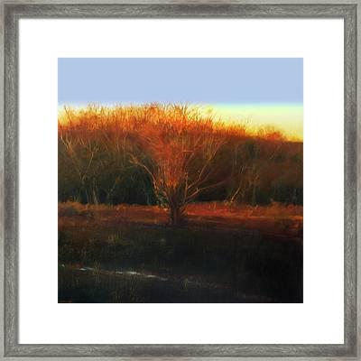 Fire Tree 2 Framed Print