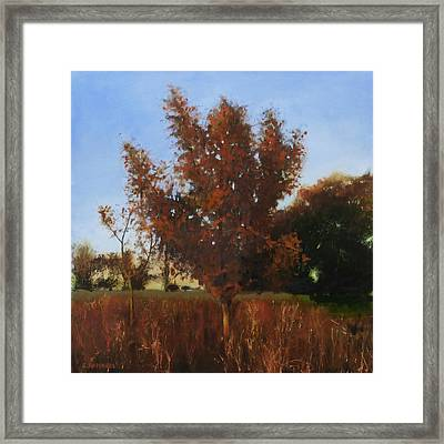 Fire Tree 3 Framed Print