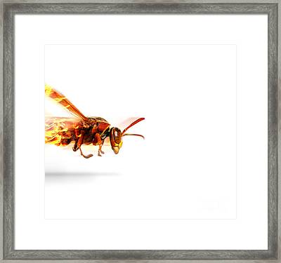 Fire Wasp Racing At Scorching Speed Framed Print
