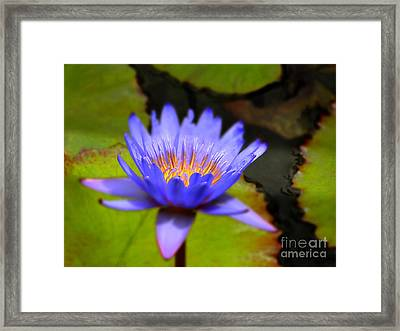 Fire Within Framed Print by Sue Melvin