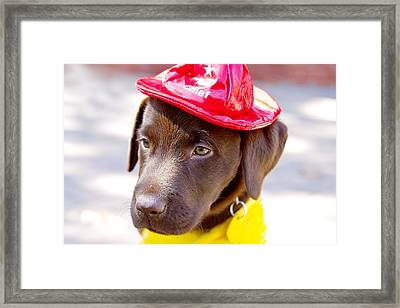 Firefighter Pup Framed Print