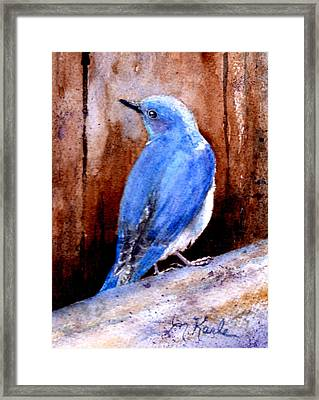 Firehole Bridge Bluebird - Male Framed Print