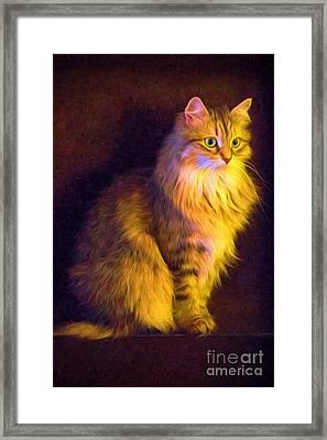 Fireside Feline Framed Print