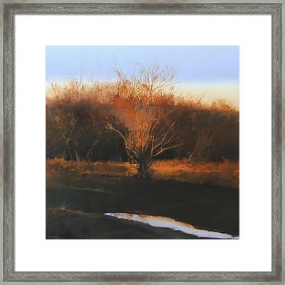 Framed Print featuring the painting Fire Tree 2 by Cap Pannell