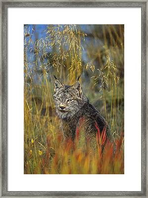 Fireweed Hunter Framed Print