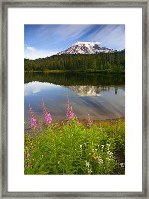 Fireweed Reflections Framed Print by Mike  Dawson