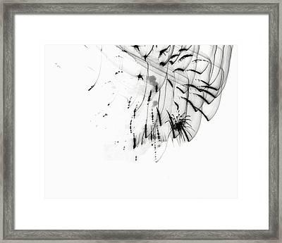 Firework Abstract 5 Framed Print