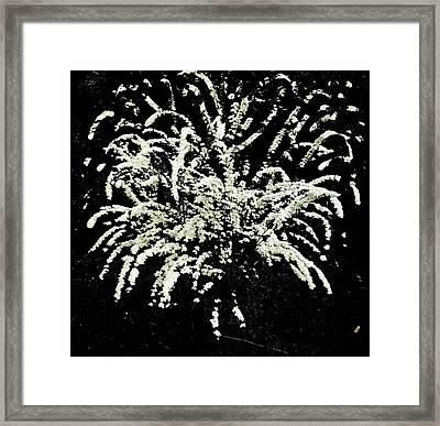 Firework Plant Framed Print by Shirley anne Dunne