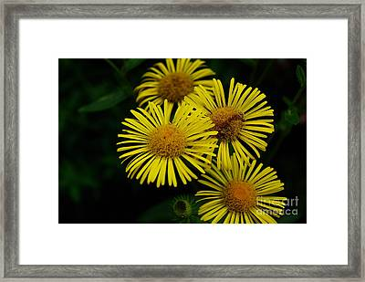 Fireworks In Yellow Framed Print by John S