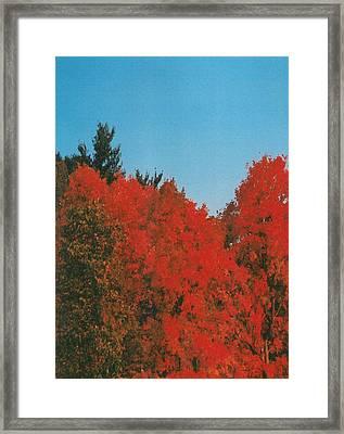 Firey Fall Framed Print