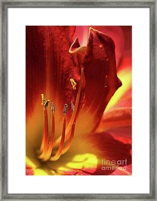 Firey Lily Framed Print by Sabrina L Ryan
