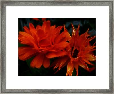 Firey Red Orange Flowers Abstract Framed Print by Cindy Wright