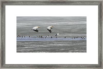 First Arrivals 2014-1 Framed Print