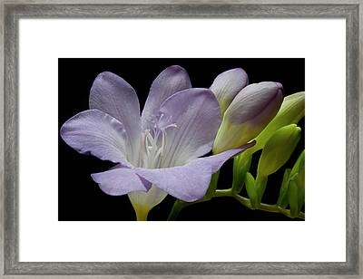 First Bloom Framed Print by Terence Davis