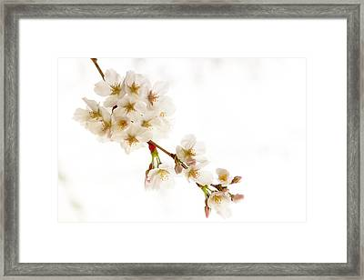 Framed Print featuring the photograph first blossoms on the Basin by Edward Kreis