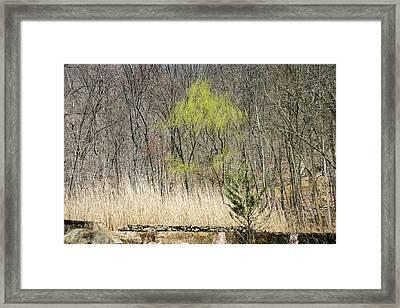 First Color - Framed Print