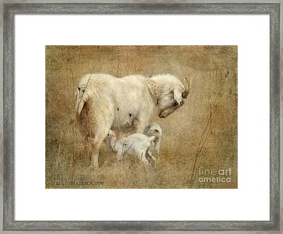First Day Of Life Framed Print by Kathy Russell