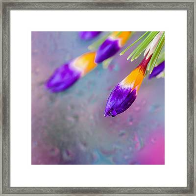 First Day Of Spring. Square Framed Print