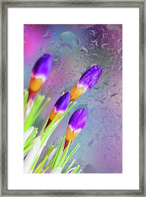 First Day Of Spring Framed Print