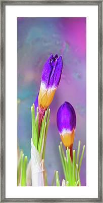 First Day Of Spring. Vertical Framed Print