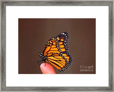 First Flight Framed Print by Marta Robin Gaughen