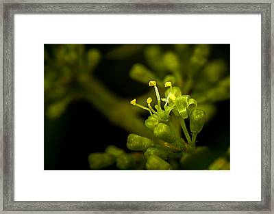 First Flower Framed Print