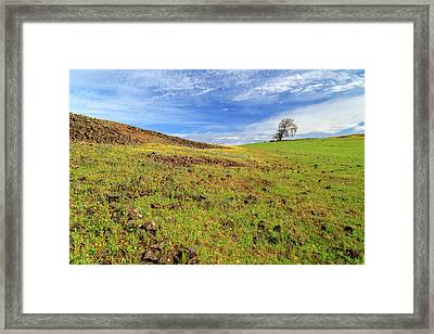 Framed Print featuring the photograph First Flowers On North Table Mountain by James Eddy