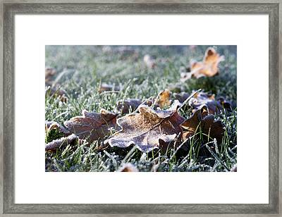 Framed Print featuring the photograph First Frost by Helga Novelli