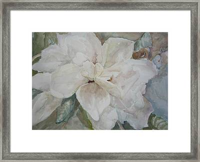 First Gardenia Framed Print by Dorothy Herron
