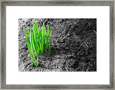 First Green Shoots Of Spring And Dirt Framed Print