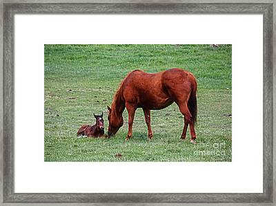 First Hour Framed Print