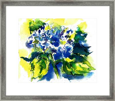 First Hydrangea Framed Print
