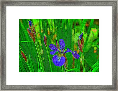 First Iris To Bloom Framed Print