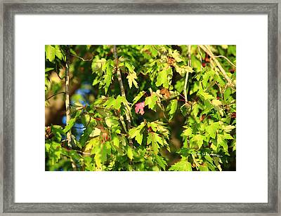 Framed Print featuring the photograph First Leaf by R B Harper