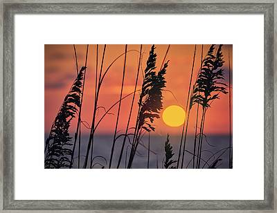 First Light Framed Print by Eduard Moldoveanu
