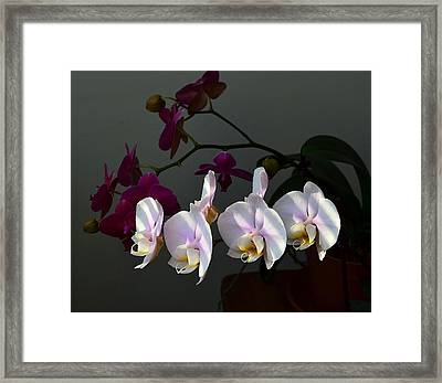 First Light Framed Print by Kathy Eickenberg