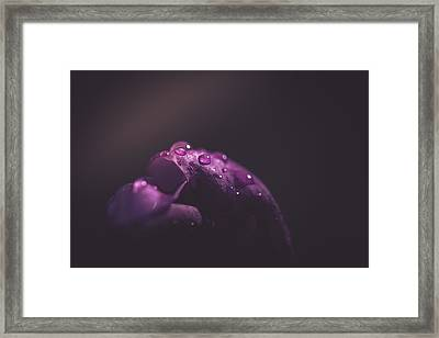First Light Of Spring Framed Print by Shane Holsclaw