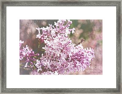 Remembrance Of Long Ago Framed Print by Lucinda Walter