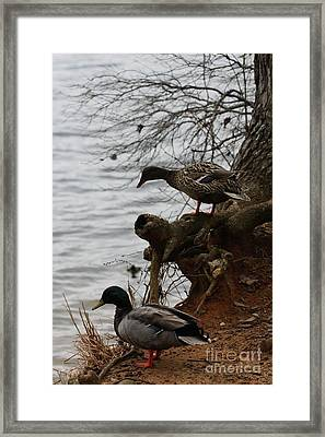 Framed Print featuring the photograph First One In by Kim Henderson