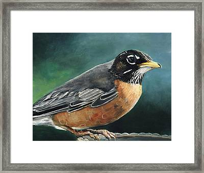 First Robin Framed Print