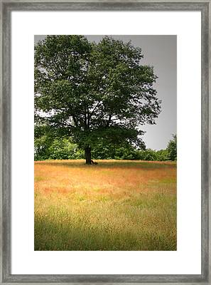 First Shots Framed Print by Brian M Lumley