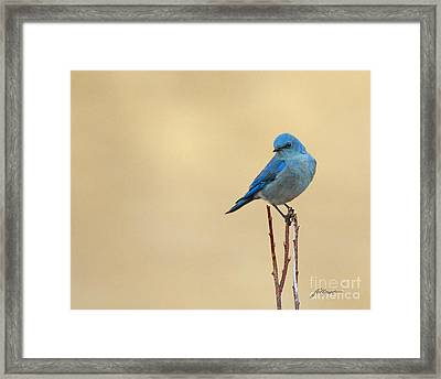 First Sign Of Spring Framed Print