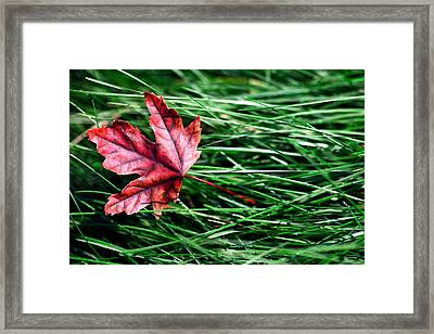 First Signs Of Autumn Framed Print by Todd Klassy
