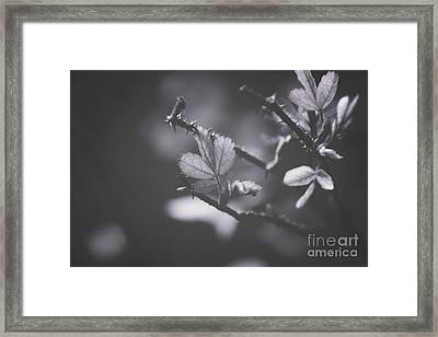First Signs Of Spring -georgia Framed Print