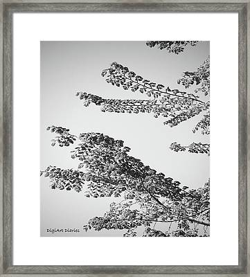 First Signs Of Spring II Framed Print by DigiArt Diaries by Vicky B Fuller