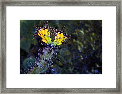 First Signs Of Spring On The Sonoran Desert Framed Print