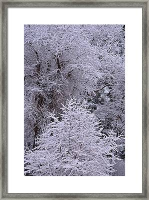 First Snow I Framed Print